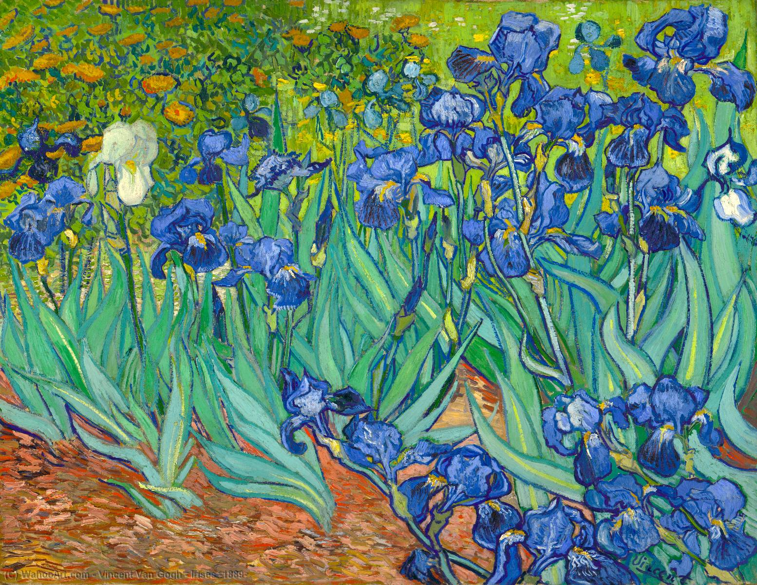 famous painting Irises [1889] of Vincent Van Gogh