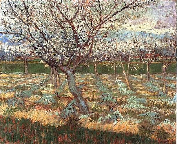 famous painting Apricot Trees in Blossom 2 of Vincent Van Gogh
