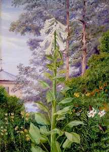 Marianne North - The Giant and Other Lilies in Dr Allman's Garden at Parkstone, Dorset
