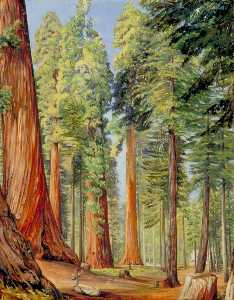 Marianne North - The Calaveras Grove of the Big Tree or Wellingtonia, in the Evening
